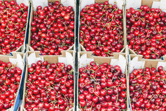 Sweet red cherry background Royalty Free Stock Photo