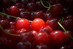 Sweet red cherry Stock Images