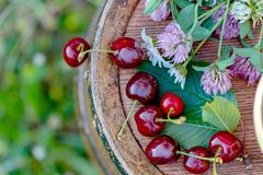 Sweet red cherry in a basket and wild flowers on a wooden wine barrel in a  garden in the summer. Copy space. Soft focus. Sweet red cherry in a basket and wild royalty free stock photos
