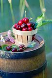 Sweet red cherry in a basket and wild flowers on a wooden wine barrel in an   orchard in summertime. Copy space. Soft focus. Sweet red cherry in a basket and stock images