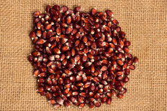 Sweet red corn Royalty Free Stock Photography