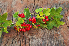Sweet, red currant and green leaves on wooden background. Stock Photography