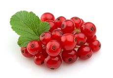 Sweet red currants Royalty Free Stock Image