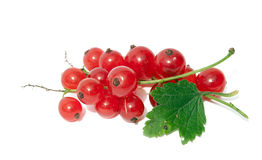 Sweet red currants Royalty Free Stock Photo