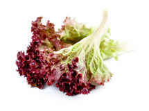 Sweet red lettuce Royalty Free Stock Photo