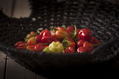 Sweet red pepper Royalty Free Stock Image