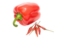 Sweet red pepper. Fresh paprika isolated on white Royalty Free Stock Photo
