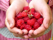 Sweet red raspberries. Red raspberries in the hands royalty free stock photo