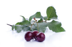 Sweet ripe cherry with leaf Royalty Free Stock Photography