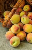 Sweet ripe peaches Stock Photography