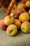 Sweet ripe peaches Royalty Free Stock Photography