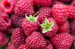 Sweet ripe raspberry Stock Photo