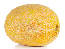 Sweet ripe yellow oval melon Royalty Free Stock Photography
