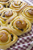 Sweet rolls. With pudding and raisins Royalty Free Stock Images