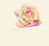 Sweet rose Stock Photography