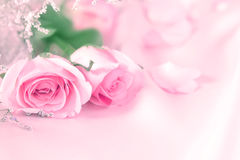 sweet rose flowers for love romance background Stock Photos
