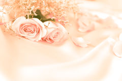 Sweet rose flowers for love romance or wedding background Royalty Free Stock Photo