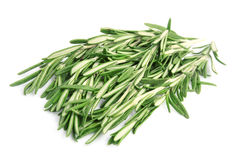 Sweet rosemary Royalty Free Stock Images