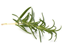 Sweet rosemary leaves Royalty Free Stock Photo