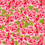 Sweet roses Stock Photos