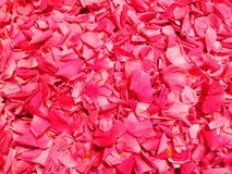 Sweet roses petals jam background Royalty Free Stock Images