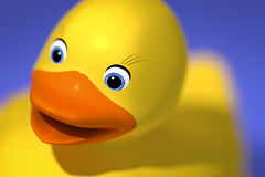 Sweet rubber ducky Royalty Free Stock Photos