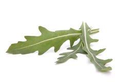 Sweet rucola salad or rocket lettuce leaves Royalty Free Stock Image