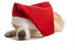 Sweet Santa Claus dog for xmas time Royalty Free Stock Photography
