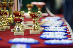 Sweet shine of victory. Golden cups and rosettes on cat show Stock Photography