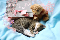 Sweet sleeping kitten as present Royalty Free Stock Image