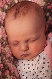 Sweet Sleeping Newborn Royalty Free Stock Photos