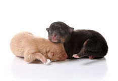 Sweet Sleeping Newborn Puppy Dogs on White Stock Images