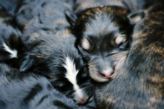 Sweet sleeping puppies Stock Images