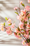 Sweet-smelling spring flowers in the kitchen Royalty Free Stock Images