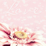 Sweet Soft Pink Flower and hearts Background Royalty Free Stock Image