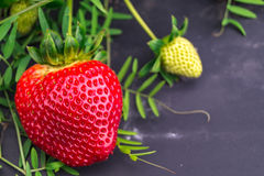 A sweet strawberrie. A strawberrie on a farm in texas Stock Photos