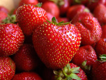 Sweet Strawberry. Natural Latvian Strawberry Stock Photo