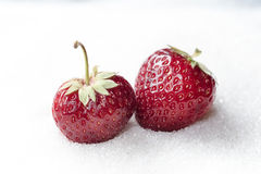 Sweet strawberry isolated over white sugar background. Royalty Free Stock Photography