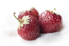 Sweet strawberry isolated over white sugar background. Stock Photography
