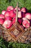 Sweet summer apple in wicker basket Stock Photo