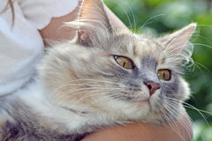 Sweet tabby cat Stock Photos