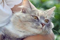 Sweet tabby cat Stock Photos
