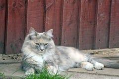 Sweet tabby cat Stock Photography