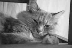 Sweet tabby cat Stock Image