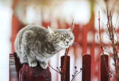 Sweet tabby cat walks in the spring in the village and fondled royalty free stock photos