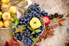 Seasonal healthy food, sweet and tasty autumn fruits Stock Images
