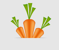 Sweet tasty carrot vector illustration Stock Photos
