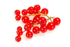 Sweet tasty fresh Red currant. Berries stock photo