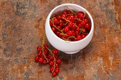 Sweet tasty fresh Red currant. Berries stock photos
