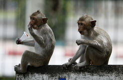 Sweet time. Two monkeys  in a park at Asia Royalty Free Stock Photos